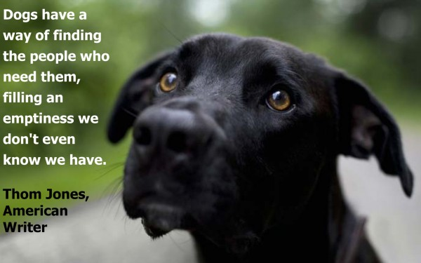 dog lovers quotes bing images pinpoint