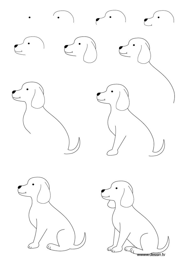 The kids will love this How to Draw a Dog Step by Step Instructions   learn how to draw a puppy with s