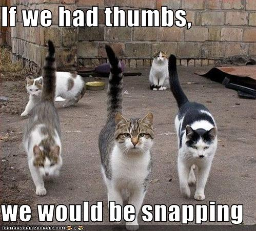 cats-would-snap-if-they-had-thumbs..and do a rendition of West Side Story