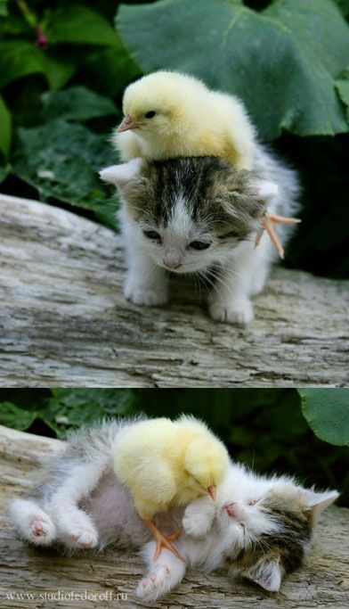 Kitty and chick. Adorable.