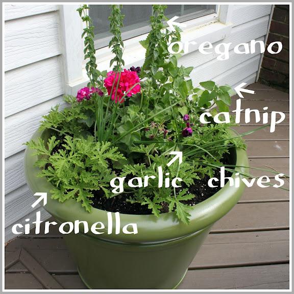 Anti-Mosquito planter