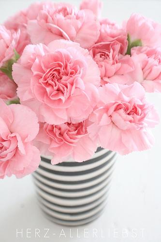vases – carnations