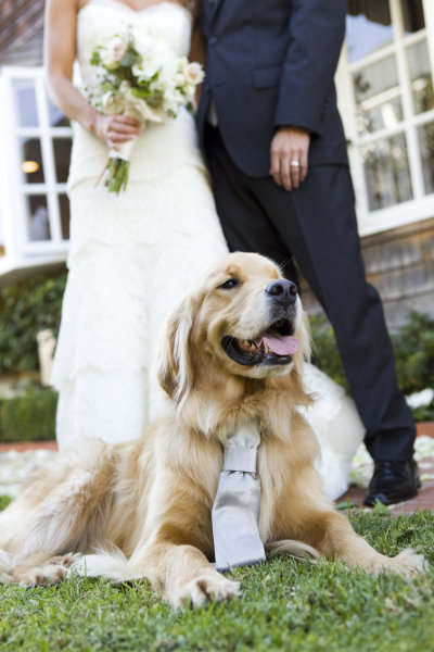 Love the tie on the dog for coming down the isle !!!