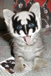 ~Kiss Kitten~