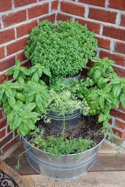 back door herb garden