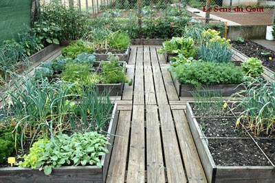 The timber paths between these raised beds make for easy access. You could maybe