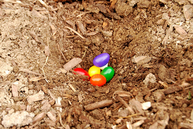"Cutest Easter Tradition 1. Buy some ""magic"" Jelly Beans 2. Plant them"