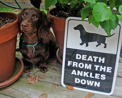 Killer Dachshund sign!