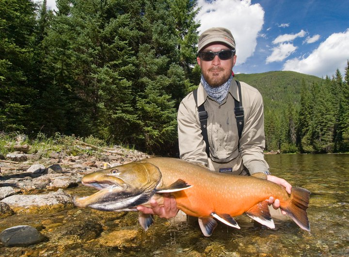 Actual Bull trout in spawning colors.