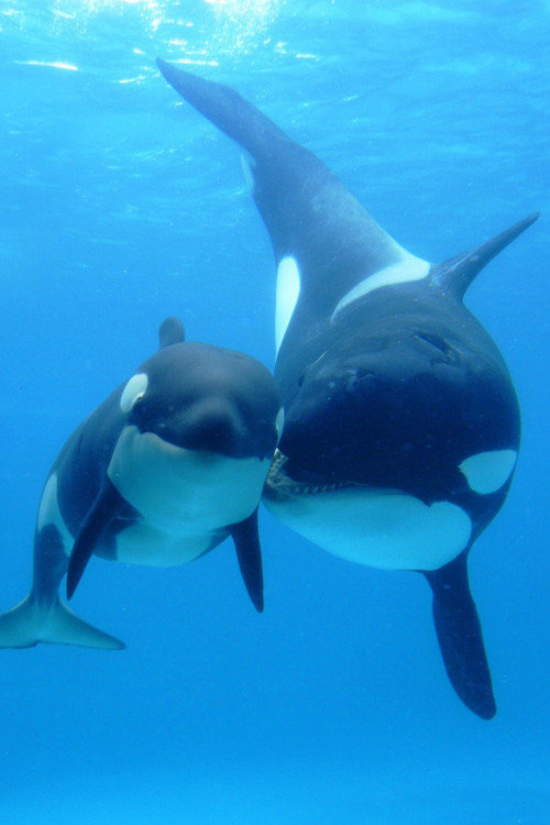 Baby Orca #franciscan