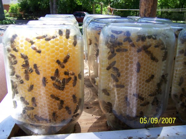 DIY – It's easier to let the bees put the honey in the jar for you. (And rea