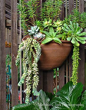 Succulent Hanging Basket …
