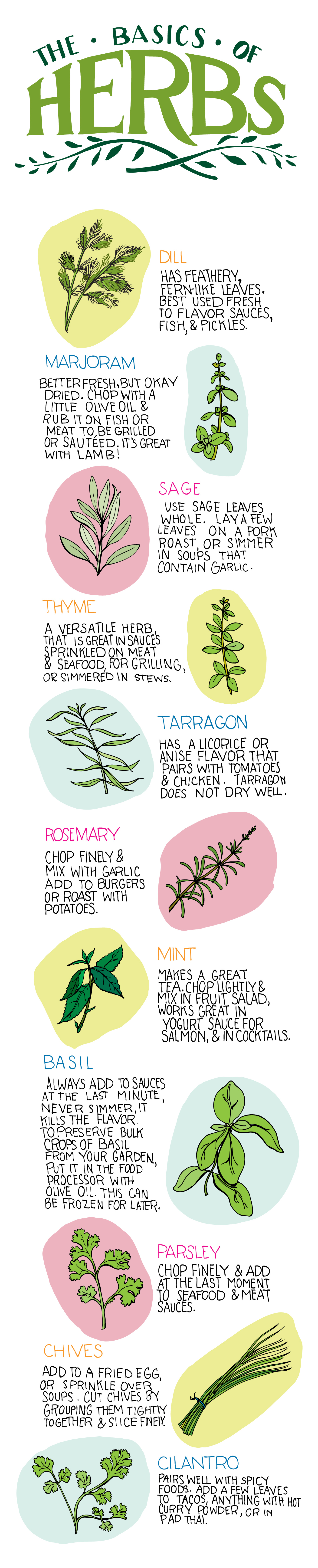 Basics of Herbs