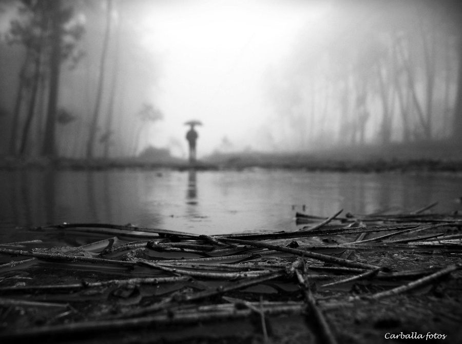 Black Wood Water Still Quiet