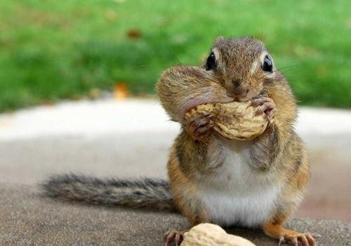 peanuts…? what peanuts?
