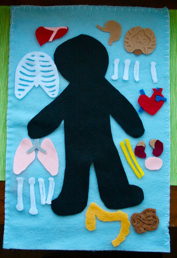 Human Anatomy Felt Board-You can buy it, but it doesn't look too hard to mak