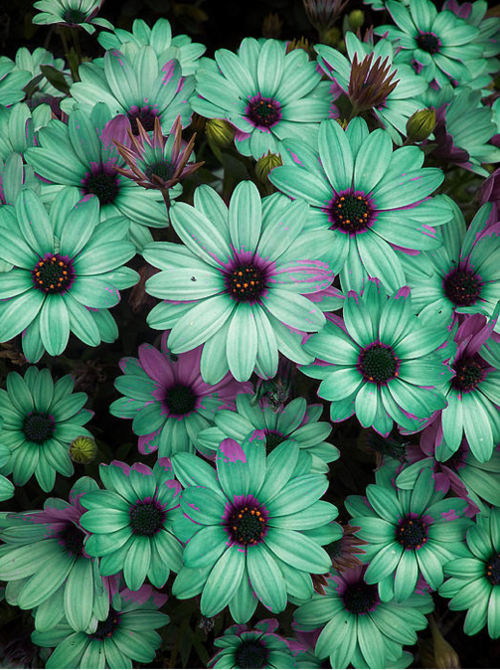 teal and purple flowers