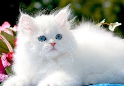 Cute Cats and Little Kittens