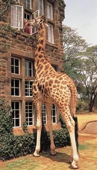 Giraffe Hotel, Africa
