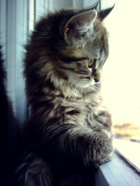 cute kittens10