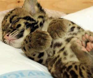Daily Squee – So cute your brain might explode. – cute animals – Cheezburger