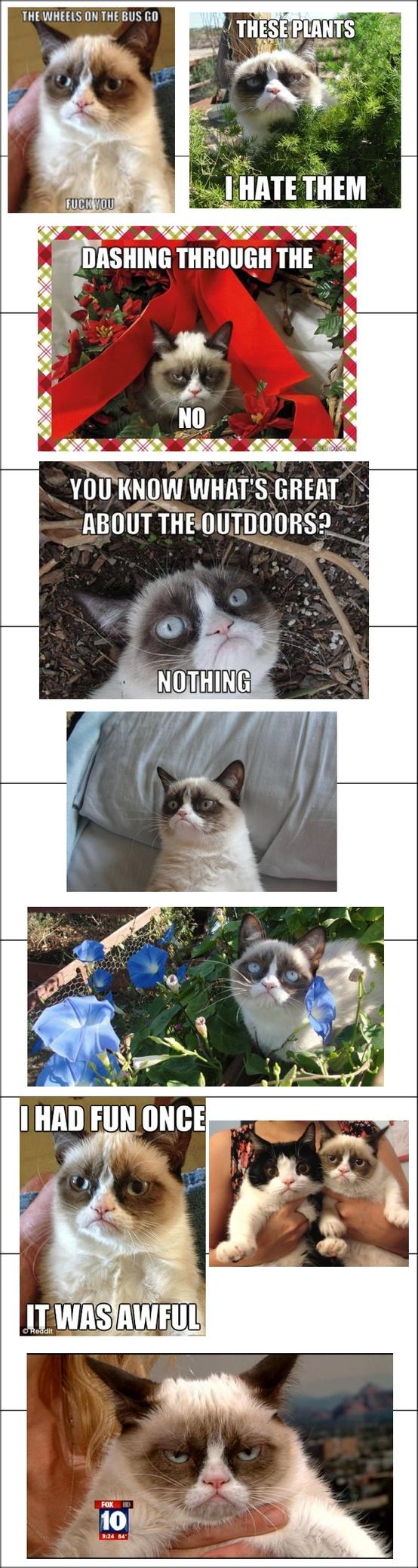 Love this Cat!!