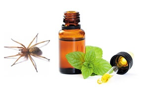 Spiders hate peppermint! Put some peppermint oil in a squirt bottle with a littl