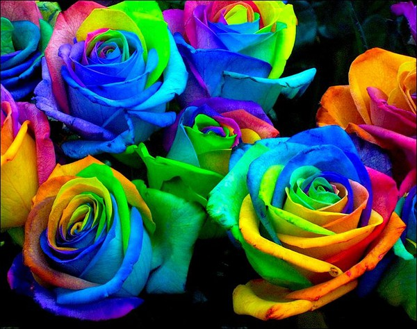 science project: Make rainbow roses by splitting the stems into strands and plac