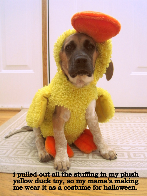 i pulled out all the stuffing in my plush yellow duck toy, so my mama's ma