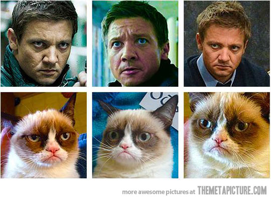 Jeremy Renner is… Grumpycat