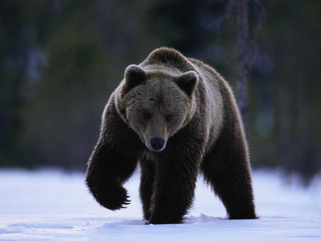 """""""Da Bears, da Bears, da Bears, da Bears, da Bears, da Bears….! Da Bears."""""""