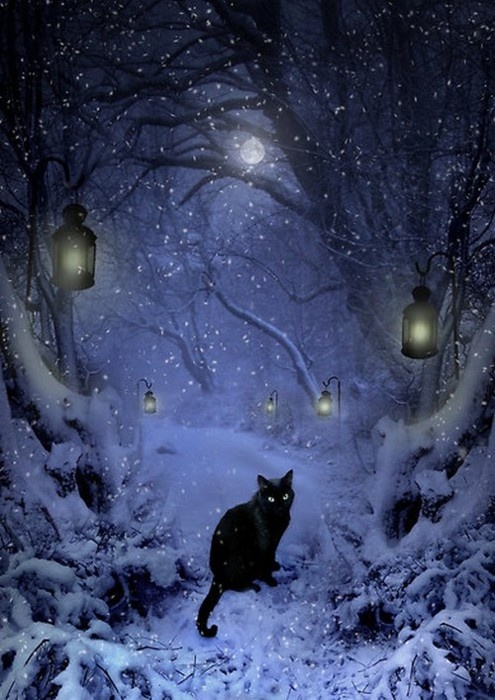 The cat will show the way…