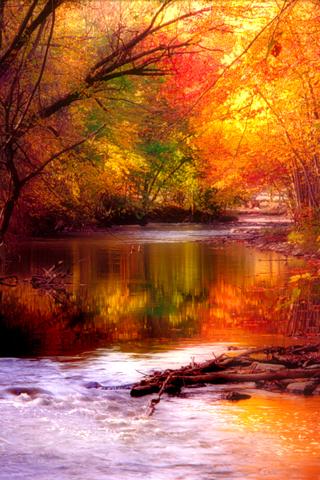 Fall colors. Brilliant.