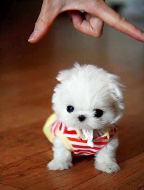 Kittens Puppies and Cupcakes: Super-Tiny Baby Teacup ...