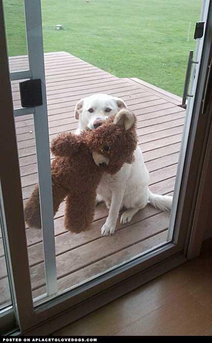 Man's best friend has his own best friend!