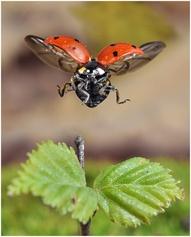 Incredible shot of Ladybug