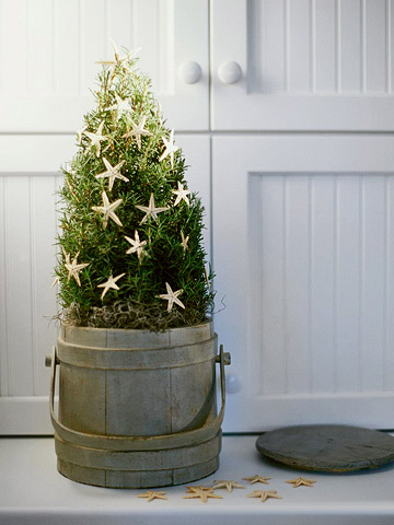 Topiary Christmas Tree  —  Delicate starfish on a rosemary topiary mimic tradit