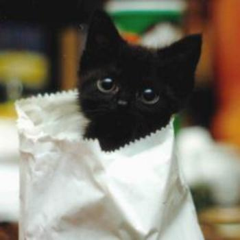 Ohmygosh! Kitten in a bag!