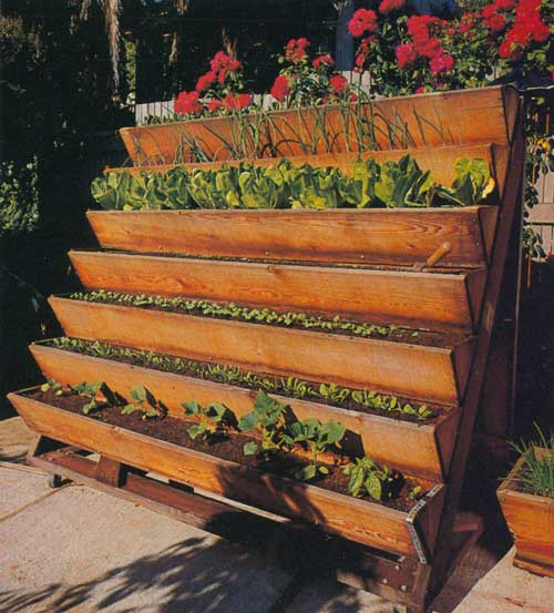 Gardening with no yard. This would go great on the side of my house filled with