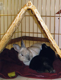 Where you place your rabbit's cage can affect its health.