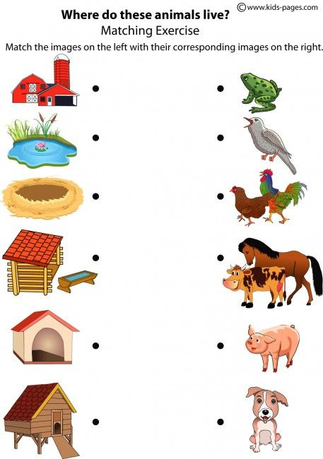 Matching animals to their home