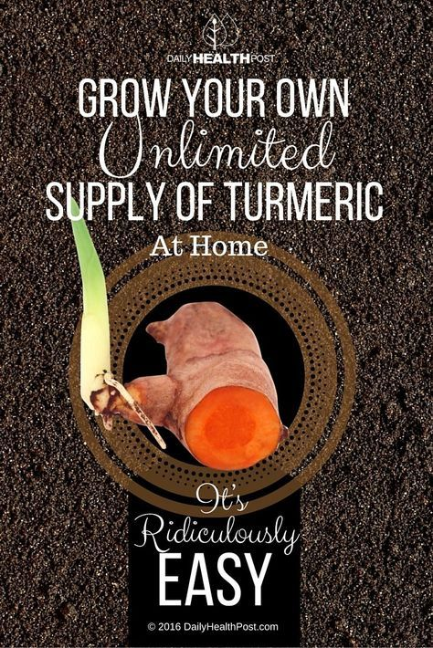 How to Grow Your Own Unlimited Supply of Turmeric At Home. It's Ridiculously Easy! via /dailyhealthpost/