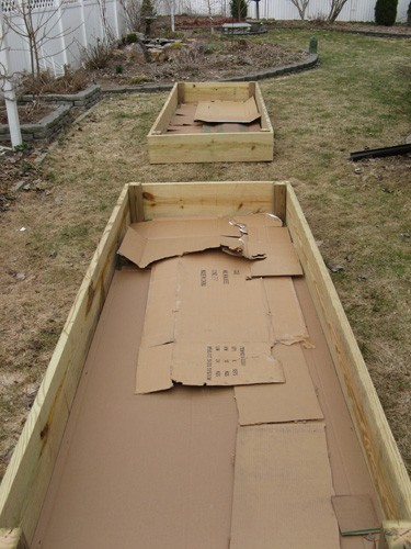 Lay down a thick layer of CARDBOARD in your raised garden beds to kill the grass. It is perfectly safe to use and will fully