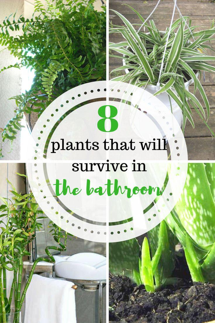 Plants plants for the bathroom bathroom plants bathroom diy home home decor gardening - Houseplants for the bathroom ...
