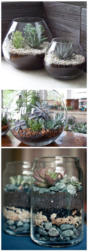 Terrariums using Cacti and succulents