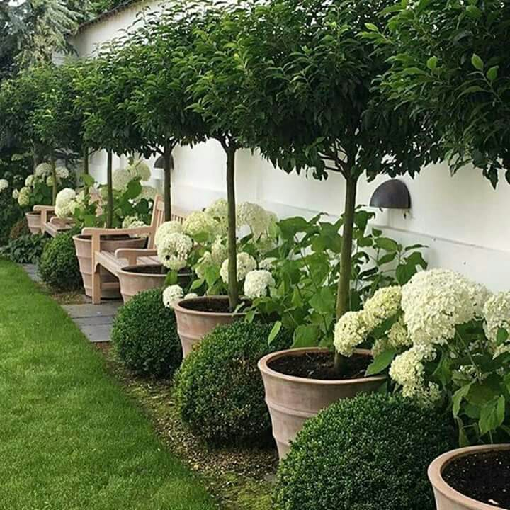 Beautiful trees in pots, lining a green space (lawn or turf)