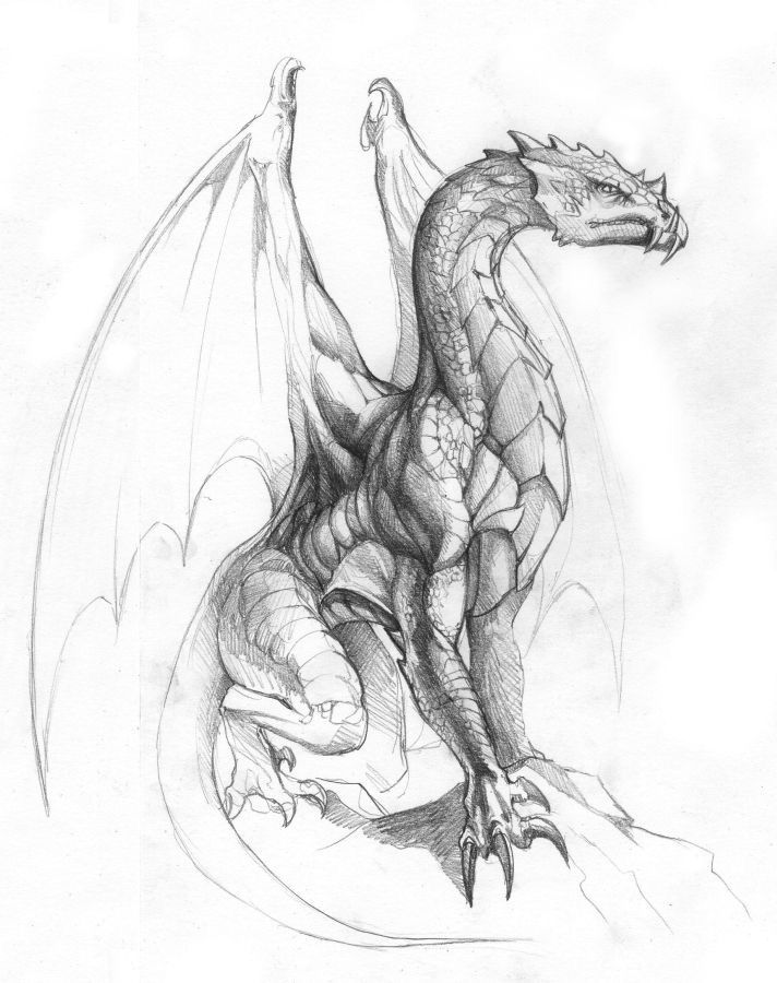 21 dragon tattoo sketch
