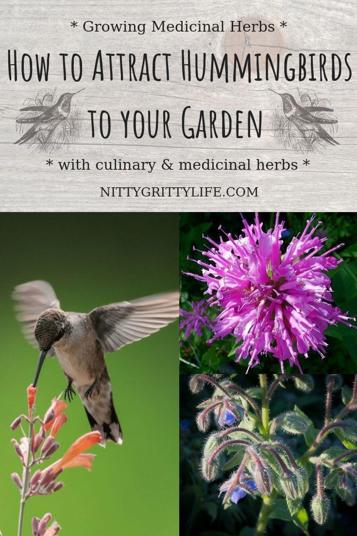 Seven Culinary & Medicinal Herbs to Attract Hummingbirds -   24 flower garden crafts ideas