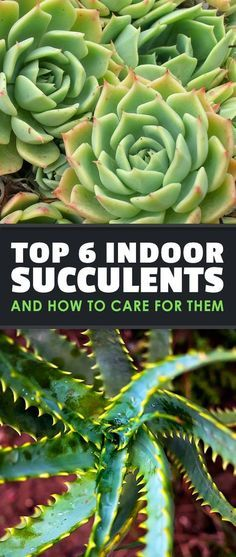19 succulent garden apartment