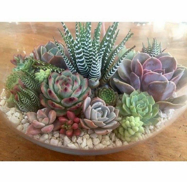 15 planting succulents cactus ideas